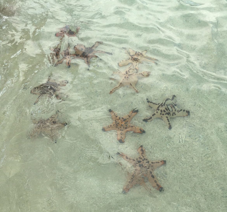 Filipijnen: Prachtige zeesterren in het ondiepe water