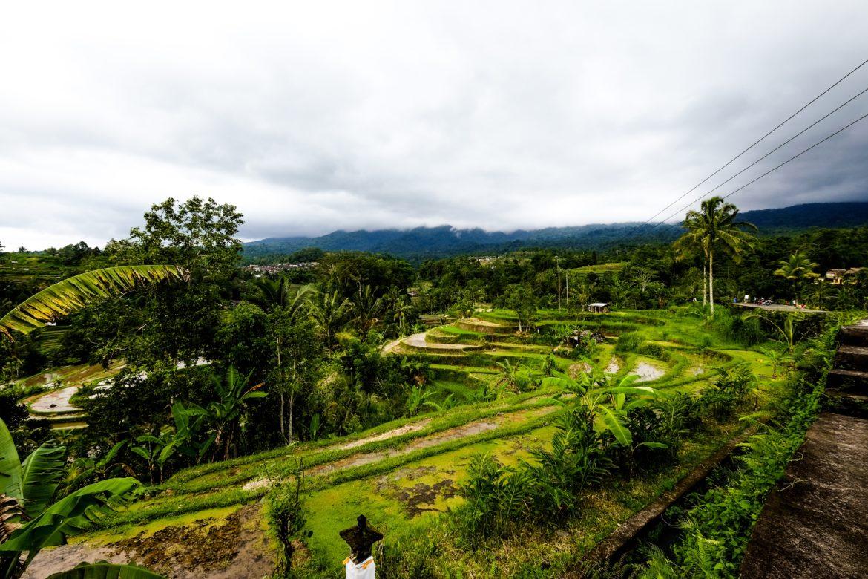 Bali: Jatiluwih