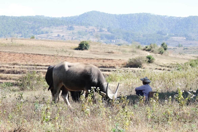 Myanmar: hiking in Kalaw