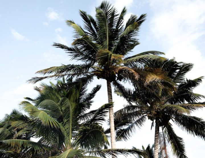 101 vragen over reizen in en naar Belize