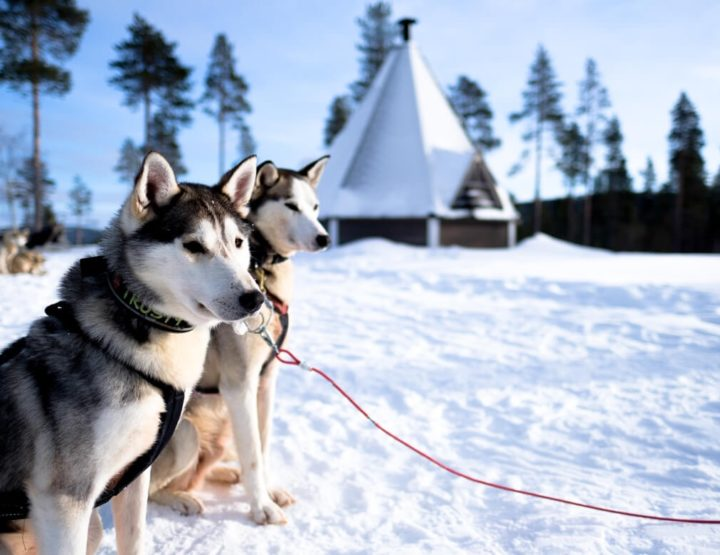 All you need to know about a huskysafari in Finnish Lapland