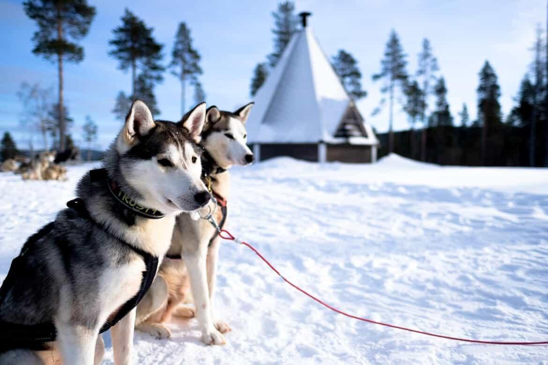 Husky safari Finland - Lapland