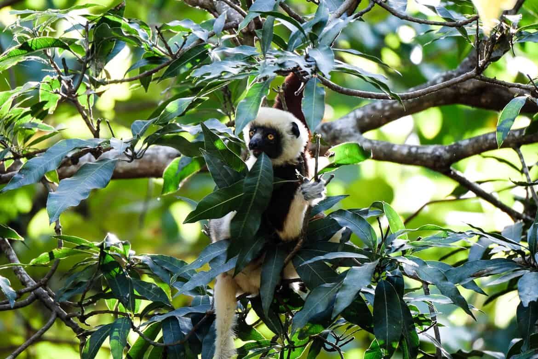 Madagascar North
