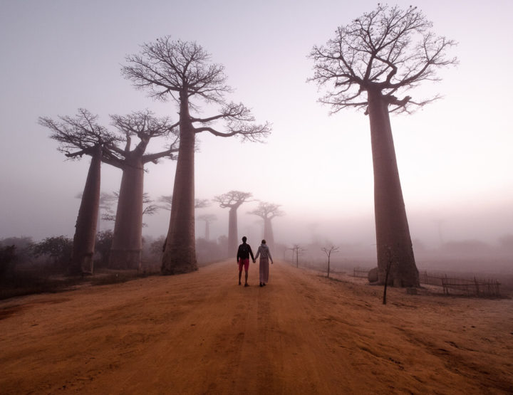 Avenue of the Baobab: the place which we would skip, but ended up visiting!