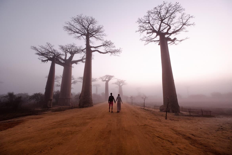 Avenue de baobab