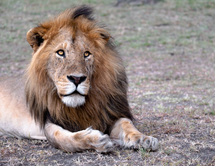 Alles wat je moet weten om een safari in Maasai Mara met een klein budget te doen!