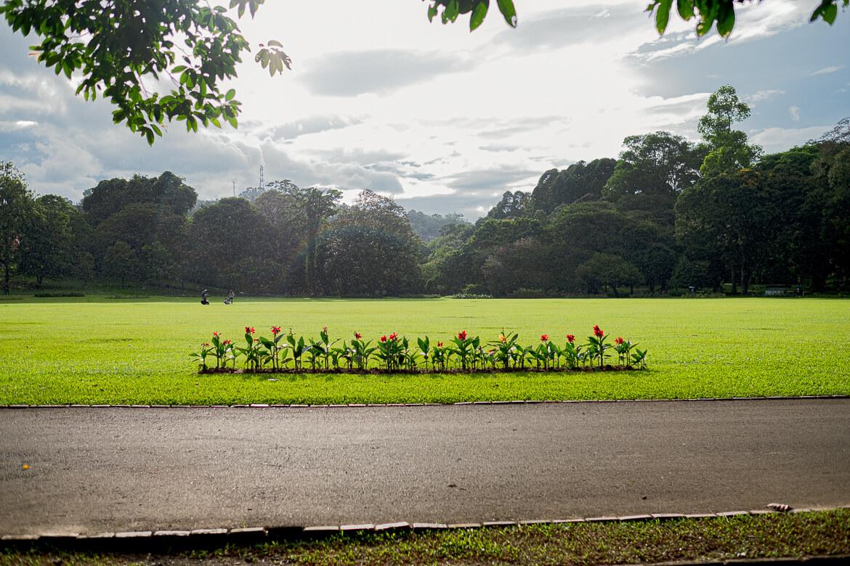 Rainy day at Royal Botanical Garden