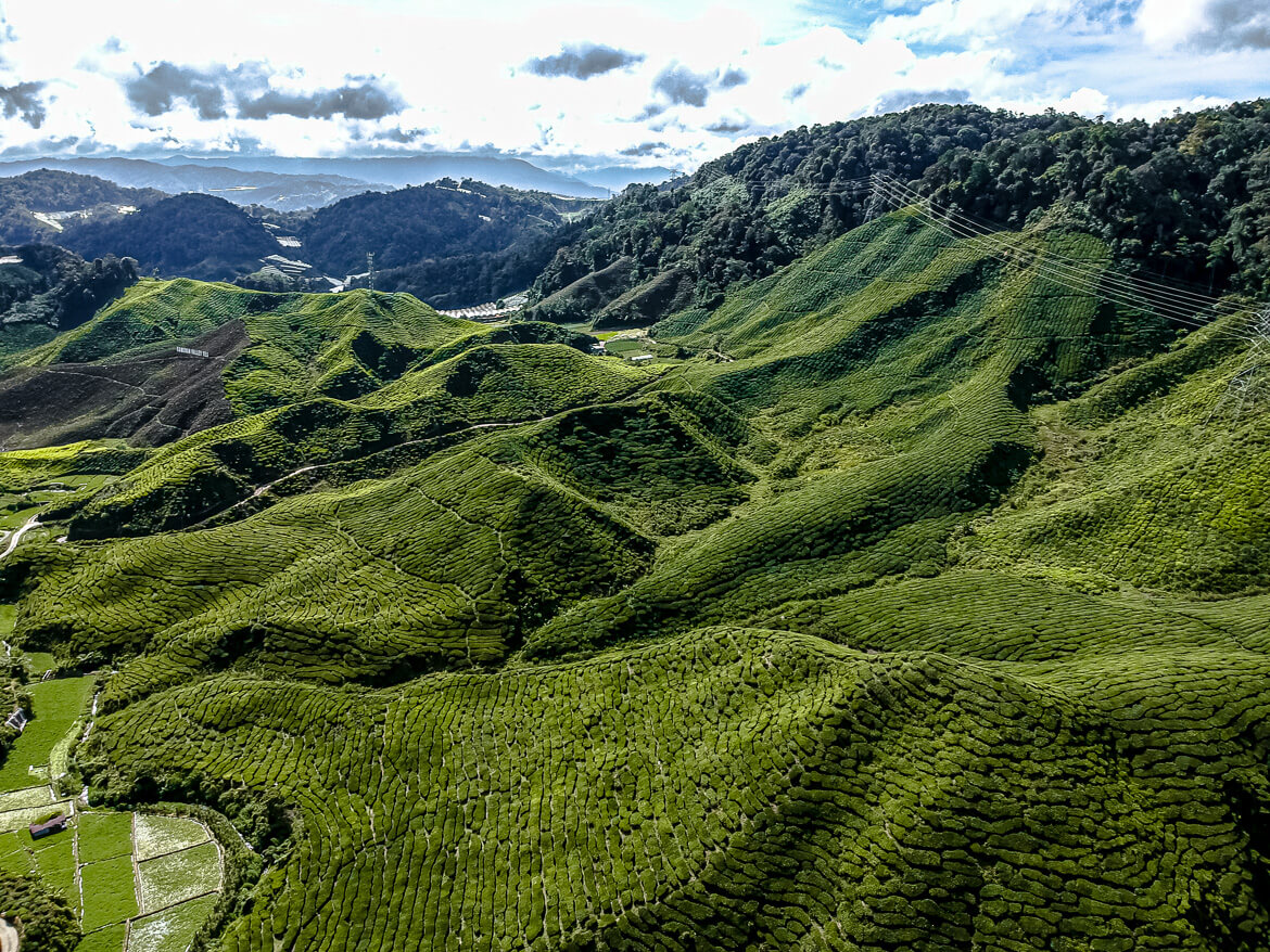 Cameron Highlands drone photography tea estate