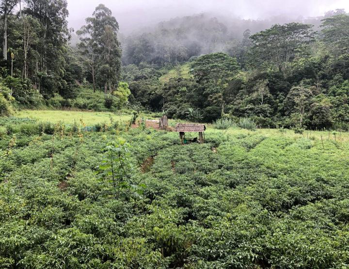 Must do in Nuwara Eliya - Sri Lanka: a visit to the tea plantations!