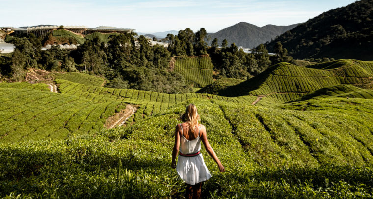 Travel guide: Three days in the Cameron Highlands in Malaysia