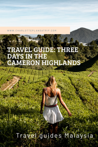 Travel Guide Cameron Highlands Malaysia what to do?